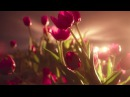 П. И. Чайковский - Вальс цветов из балета Щелкунчик - Tchaikovsky - Flower Waltz Nussknacker