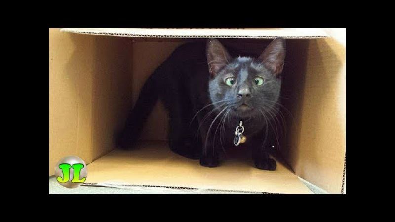 Котёнок Альф стал частью персонала ветеринарной клиники