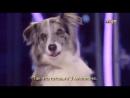 Собака из Екатеринбурга танцует тверк на ТНТ