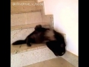 Жидкий кот 😂🤗😻