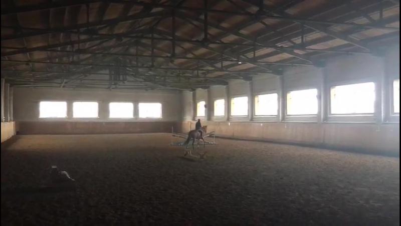 Учим прыгать скаковую лошадь