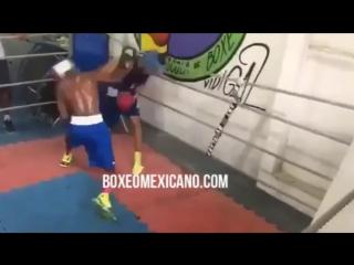 Спарринг Василия Ломаченко и Шакура Стивенсона| BoxingRoom