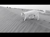 White paws on black sand🐾