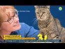 Самый старый кот на планете отметил день рождения