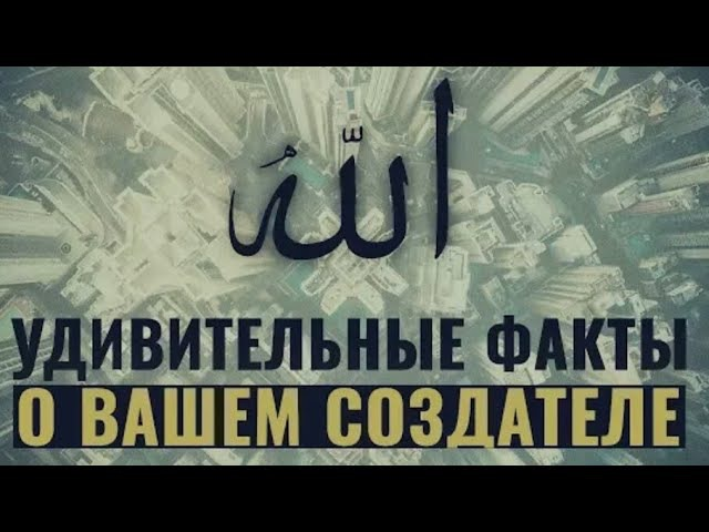 Любовь к Аллаhy / удивительные факты / братья и сёстры слушаем /