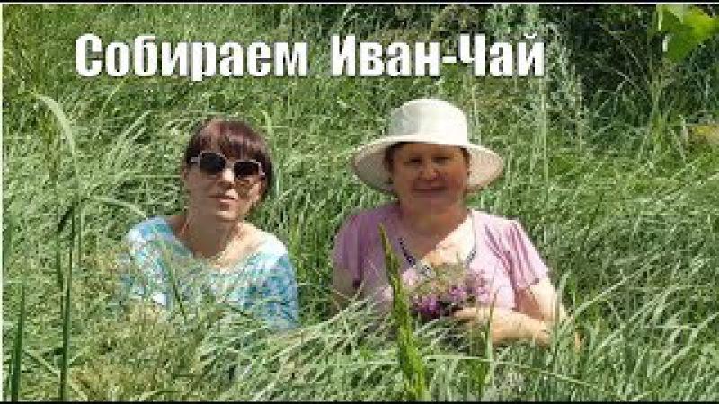 Собираем иван-чай/ Тысячелистник/ ЗверобойЧАСТЬ 1