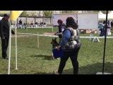 Экскалибур Форт Аданте и Электра Форт Аданте. Класс щенки. Выставка в Броварах 23 апреля 2017 г.