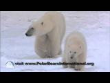 Josh Duhamel You Can Help Polar Bears