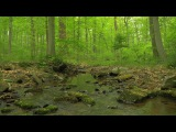 90 Minutes of Woodland Ambiance ( Nature Sounds Series #9 ) Trickling Stream &amp Bird Sounds