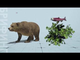 Изменение климата делает из медведей вегетарианцев