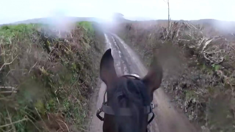 Woah Shamrock! Rider loses control of retired racehorse.