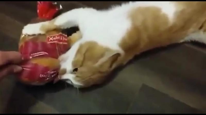 Кот Боря - Воровать так булками! Наглая рыжая морда