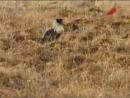 Охота на водоплавающую дичь. Охота в Якутии