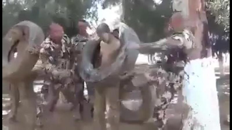 Тренировка . алжирских спецслужб для выносливости и суровых условий войны