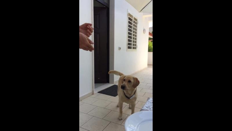 Замечательная собака Сони в славном городе Бари.