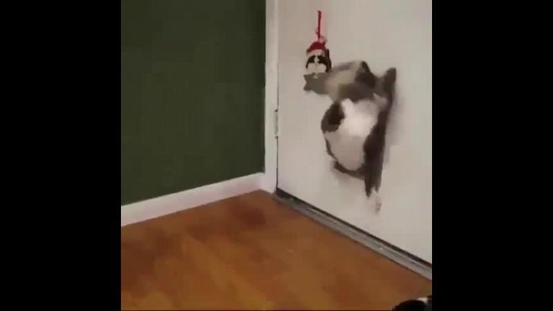 Жирный кот шпион