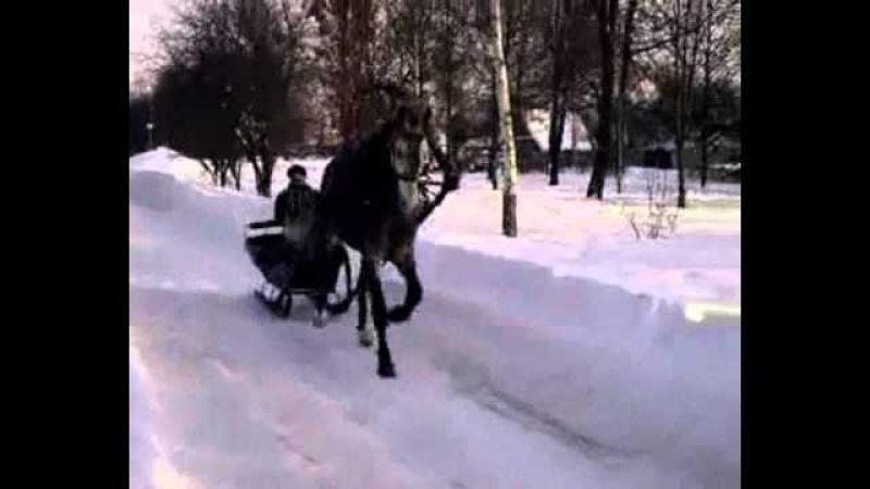 Гомельские цыгане великие коневоды
