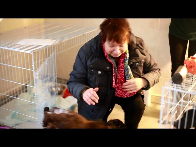 Спаниель, спасенный из «концлагеря» для собак в Нижнем Новгороде, возвращен хоз ...