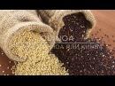 Киноа, квиноа, кинва или золотое зерно инков. Полезные свойства. Как готовить сал...