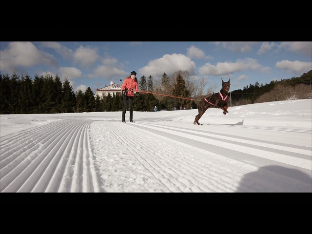 Doberman Skijoring 4WD - No Breaks