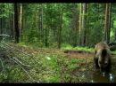 National Geographic Сибирь Суровая природа России Документальный фильм СИБИРЬ
