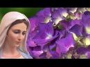 29 розарий Матери Марии 20 01 2017