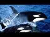 G.E.N.E. - Song of Whales (Песня китов)