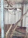 фото из альбома Татьяны Соколовскаи №16
