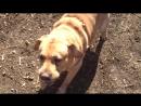 Площадка для собак в Приморском парке, Варна
