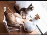 крестный кот отец