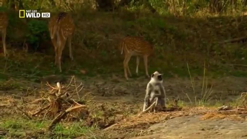 Шри-Ланка. Таинственный остров. Супер фильм. National Geographic