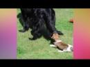 Смешные видосы про котов и собак