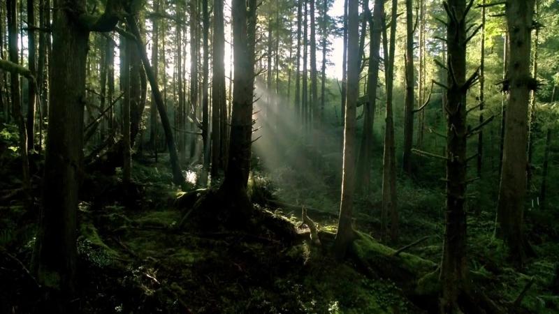 La nature•KSDM » Freewka.com - Смотреть онлайн в хорощем качестве