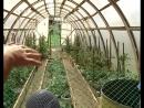 Сухие краны: с началом поливочного сезона жители Тогура и мкр. Матьянга испытывают трудности с водой