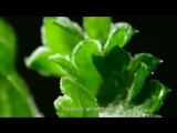 MS Food- Adventures in Ice - TV Ad 2014 (1)