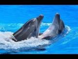 Дельфины самые удивительные морские существа. The dolphins are the most amazing sea creatures.