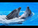 Дельфины самые удивительные морские существа The dolphins are the most amazing sea creatures