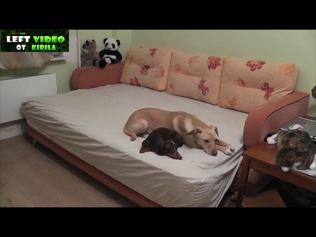 Что делают Собаки когда их хозяев нету дома,Подборка