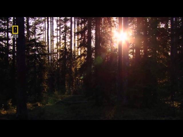 Дикая природа России - Урал (BBC)
