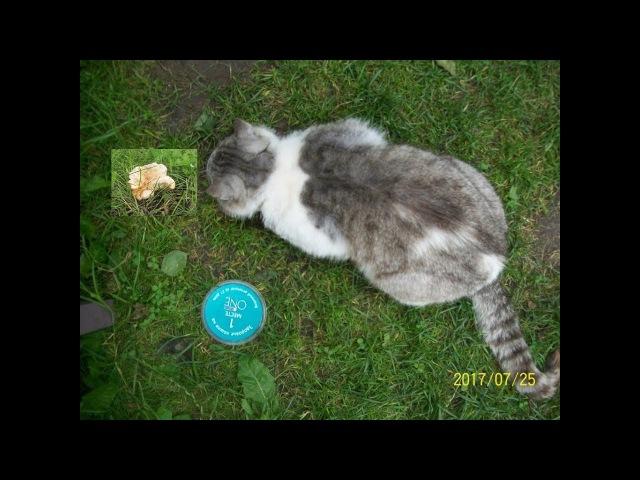Кот Саймон ест грибочки