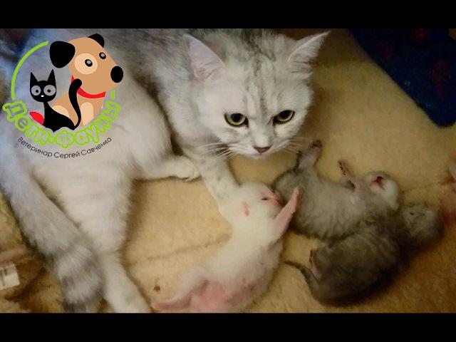 Кормление котят, когда начинать подкармливать?
