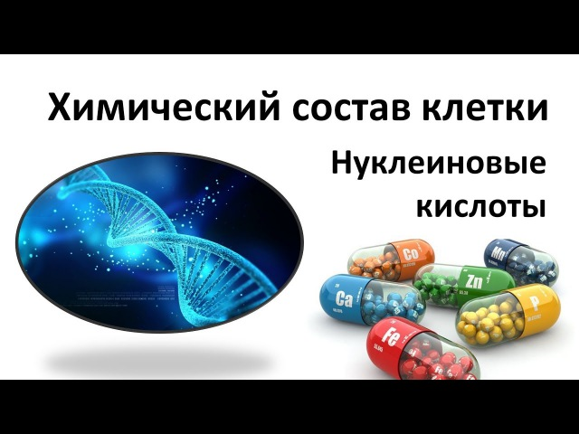 4. Нуклеиновые кислоты - ДНК (9 или 10-11 класс) - биология, подготовка к ЕГЭ и ОГЭ 2018