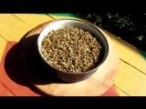 Проращивание зерна и приготовление солода. Купить самогонный аппарат недорого