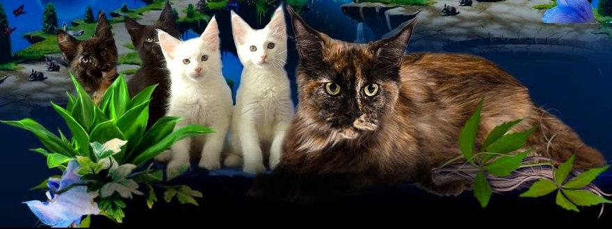 Кошки недорого в Туле