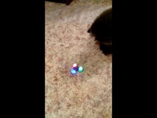 Наш котик умничка