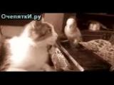 кот разговаривает с попугаем