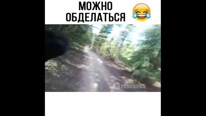 Медведь на прогулке VID-20170916-WA0000.mp4