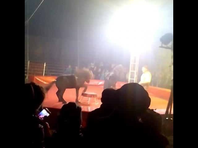 Guly.mardanova video