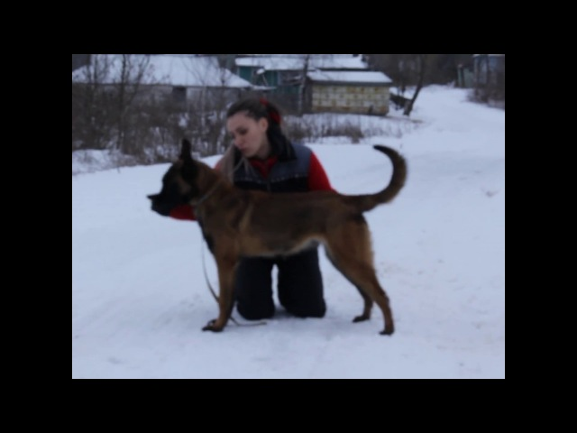 Arrack`s Home Renzo X Ice Jaws Virta