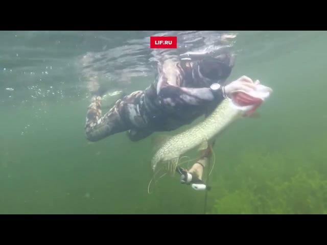 Подводная рыбалка Владимира Путина полная версия ловля щуки